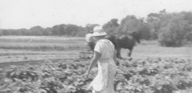 Grandma Working the Fields with Horses