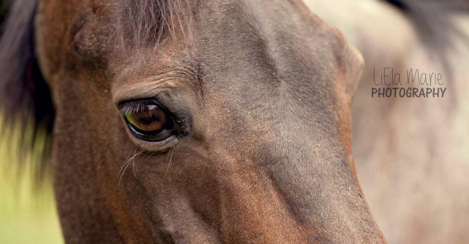 Those Quarter Horse Eyes